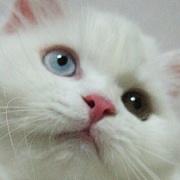 猫の目 CAT'S EYE
