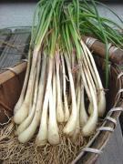 『沖縄野菜を育てよう♪』