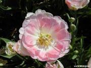 お花とアロマで楽しいな!フルフル