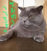 でっかい顔のネコが好き!!
