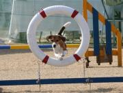 アジリティ&Dog Sports☆