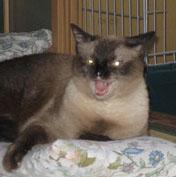 猫の目ビーム写真Φ▽Φ