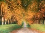 あなたが好きな秋の曲