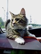 北海道の猫たち