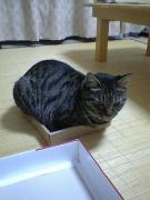 箱入り猫さん