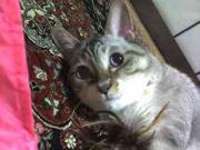 モデル・女優猫♪