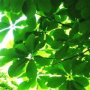 樹木・花木・果樹