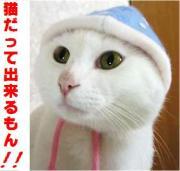 猫だって出来るもん! ☆芸する猫ちゃん☆