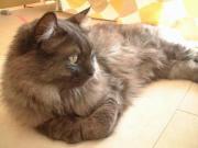 グレー猫s