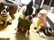 犬と0歳児の共同生活
