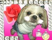 愛犬のお洋服