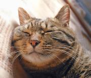 名前はプーちゃん!(猫・ネコ)