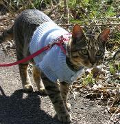 お散歩する猫