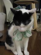 ファッション大好き猫