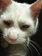 ブス猫さん・。