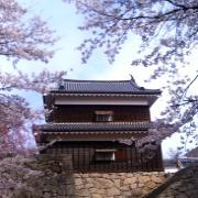 お花見、桜前線